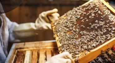 Primjena EM probiotik za pčele (doziranje)