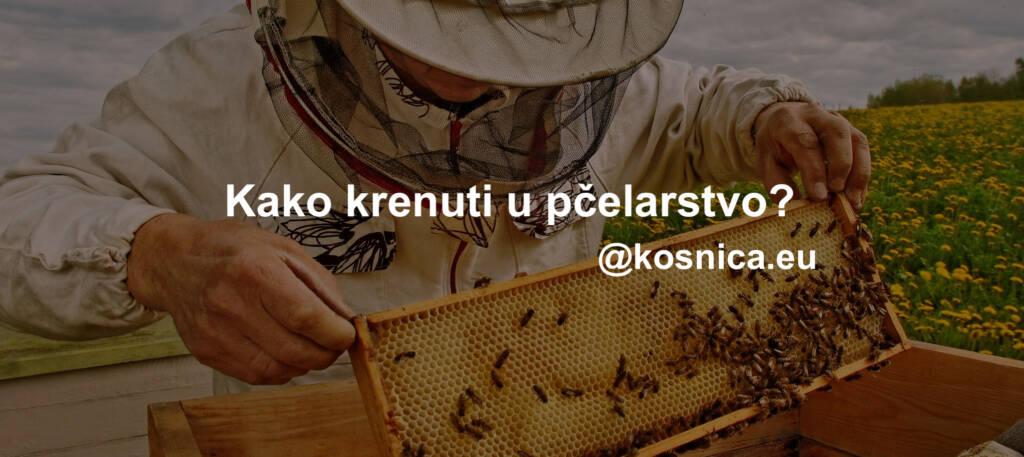 Osnove pčelarstva. Kako krenuti u pčelarstvo?