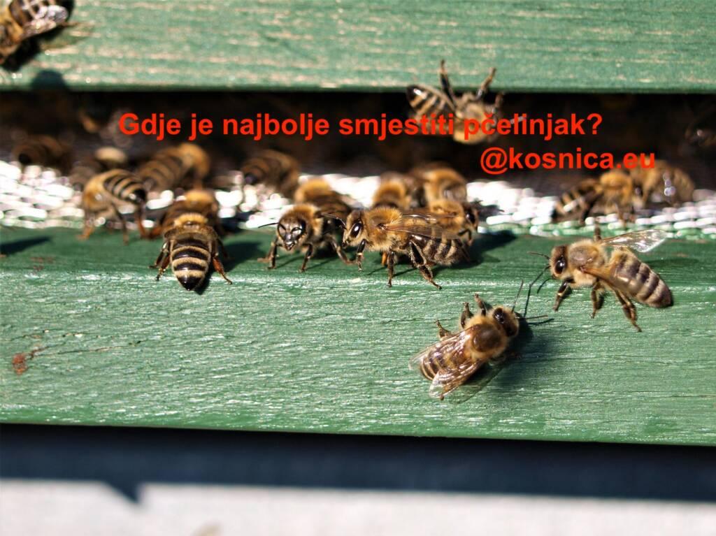 Smještaj pčelinjaka. Osnove pčelarstva. Osnovna pčelarska oprema.