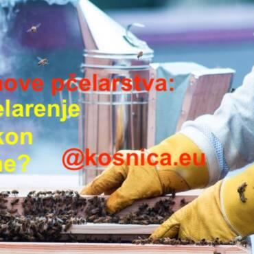 Osnove pčelarstva- što napraviti s pčelinjom zajednicom nakon zime?